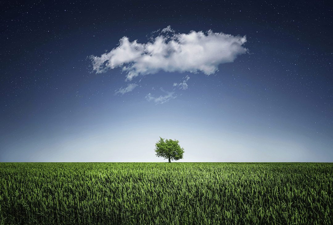 Cloud in field, with a single tree - Solihull Councilling